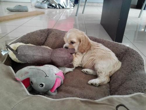 Pupje in zijn mandje