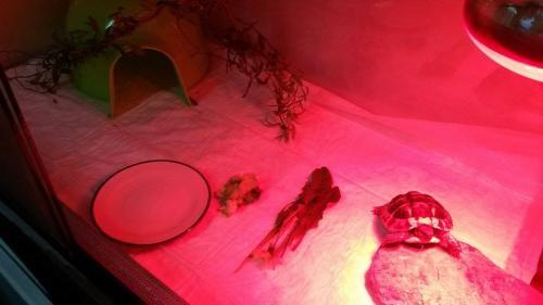 Schildpad in hospitalisatie