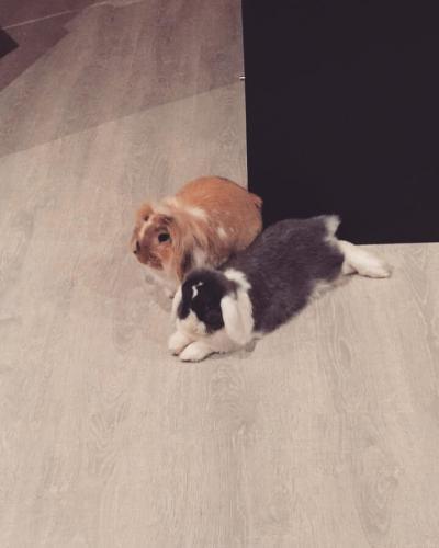 Ontspannen konijnen