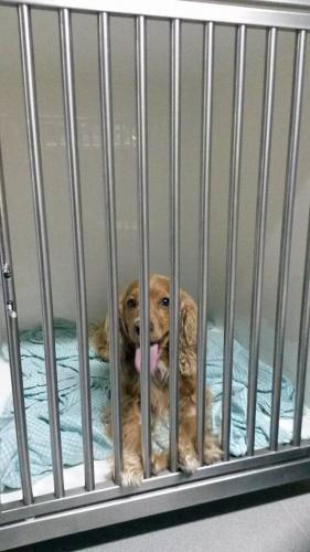 Hond in hospitalisatie na operatie