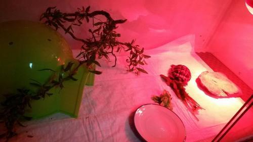 Schildpad in haar terraria