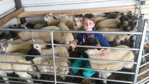 Kobe met de kudde schapen