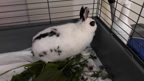 Gehospitaliseerd konijn