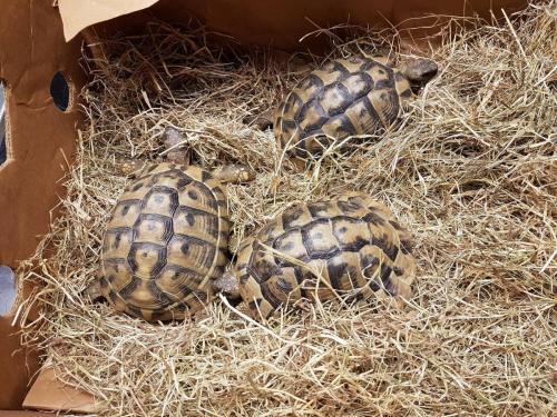 Schildpadden op huisbezoek