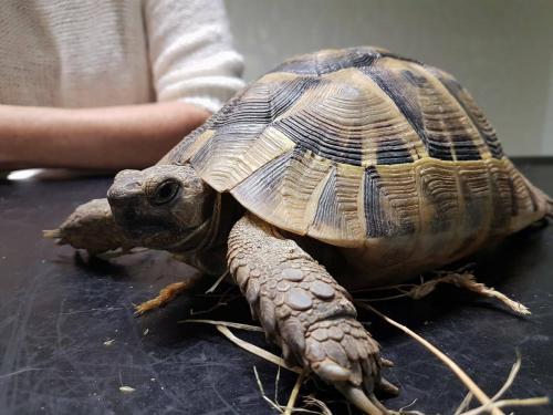 Schildpad bij de dierenarts