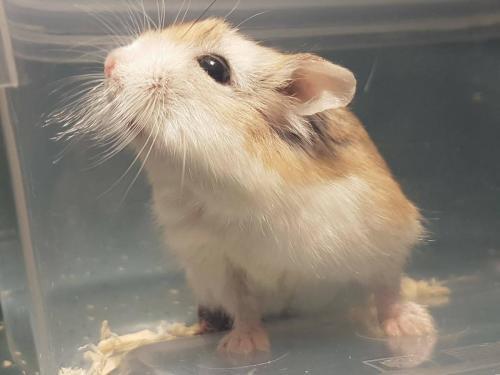 Hamster in de praktijk