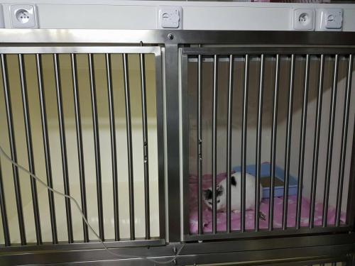 Hospitalisatie kooien met vloerverwarming en extra zuurstofvoorziening